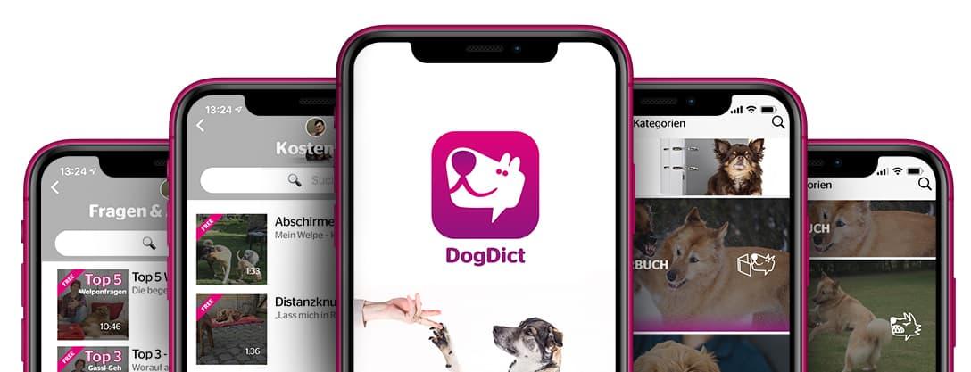 Die Hundeapp auf einem Smartphone